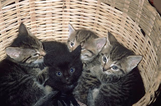 box untuk anak kucing