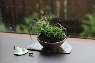 開きかけのナチアワモリショウマとコクリュウ、シュムシュノコギリソウ等の入った山野草盆栽とカエルの置物