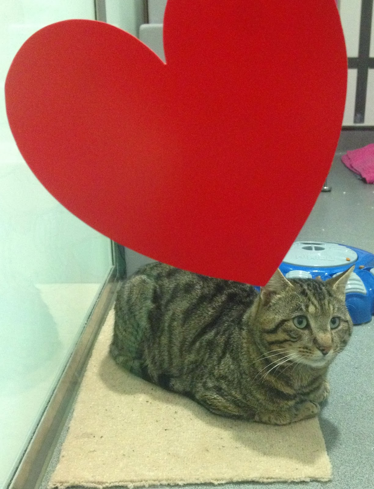 Feline Lonely at Battersea Cats Home