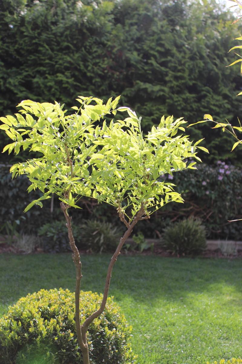 Garten im April bei kebo homing, Forsythie, Buchsbaum Formschnitt, Gräserbeet, Garten im Frühling