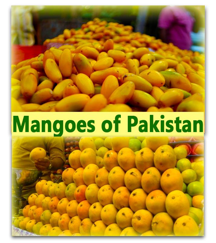 The Mangoes of Pakistan