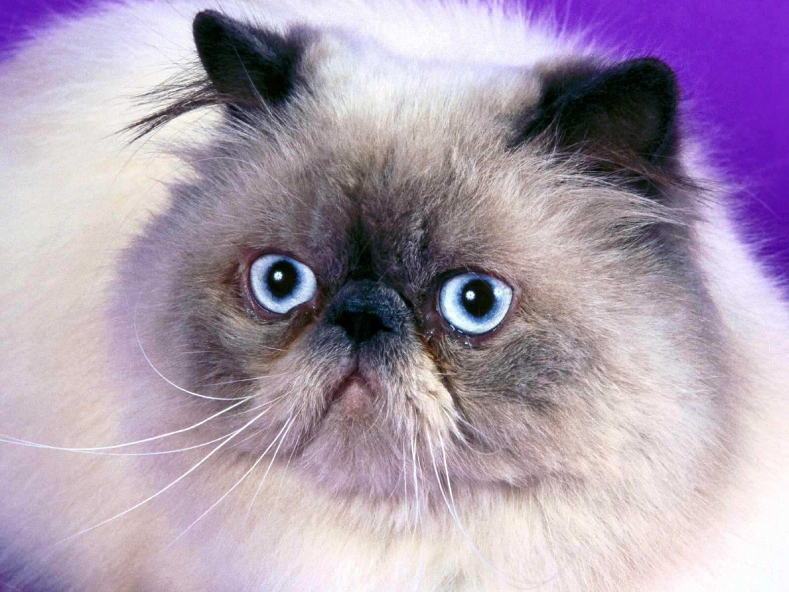 Wallpapers Hd Para Facebook Gatos Cats Mascotas Wallpapers Fondos De Pantalla Hd