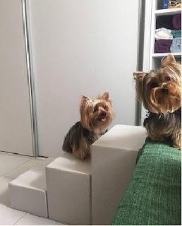 escadas para cães york