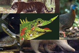 8 Hewan yang Telah Punah di Indonesia