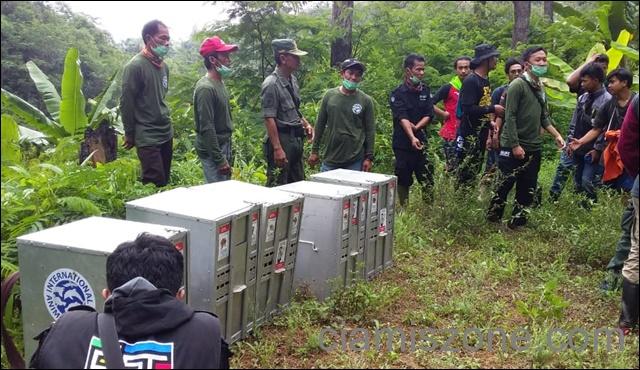 BBKSDA Lepas 10 Kukang Jawa di Gunung Sawal