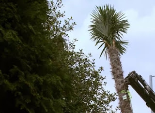 a Palm tree is laid