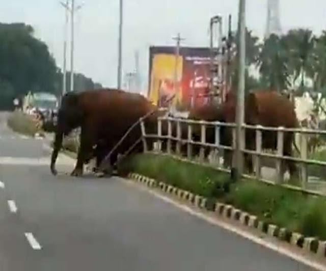 हाइवे के बैरिकेड को तोड़ हाथी ने बनाया रास्ता, देखे वीडियो