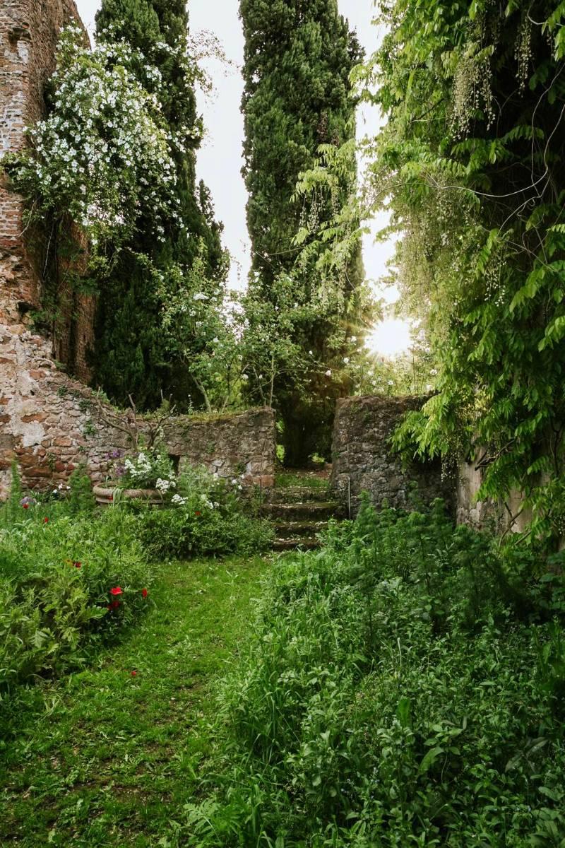 Rosales encaramados a los viejos muros