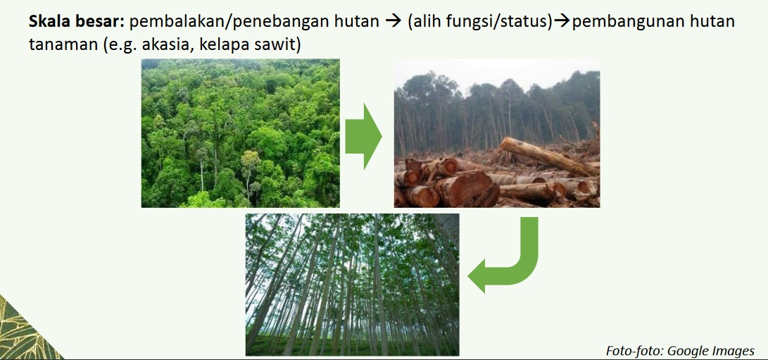 Forest Talk with Blogger Pontianak