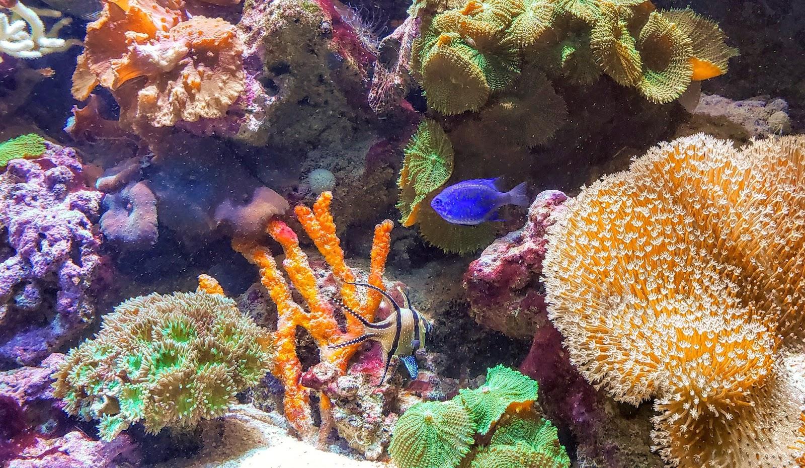 Sea Corals, New England Aquarium, Boston