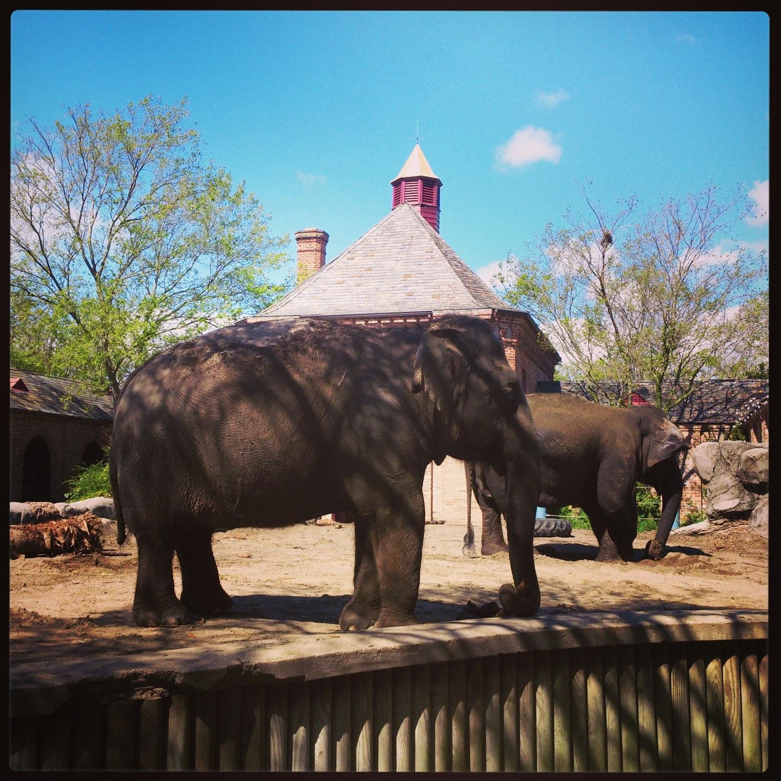 Rougarou Audubon Zoo - #traffic-club