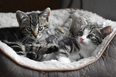 cara merawat kucing di kandang