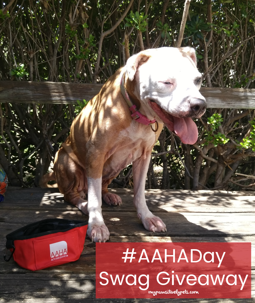 how to become aaha accredited