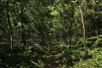 Lei 13.887/19 altera o Código Florestal
