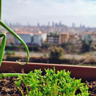 Glass Front, Plants, Pot, Natural, Green