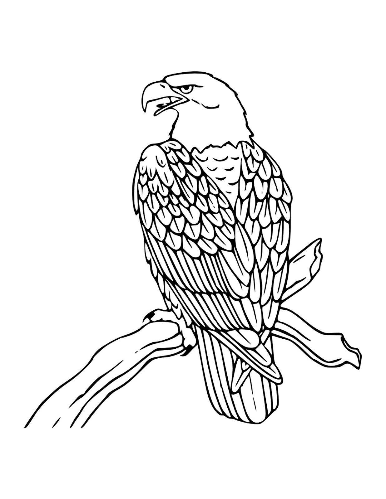 Gambar Burung Elang Dengan Pensil Pickini