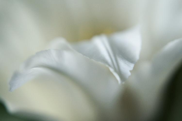 {MAKRO MONTAG} Ein Traum in Weiss