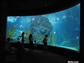 Top 7 Best Cultural Attractions in Bangkok, SeaLife Bangkok Oceanworld,