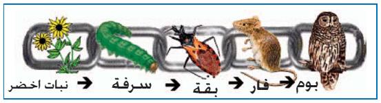العلاقات الغذائية بين الكائنات الحية عائلتي