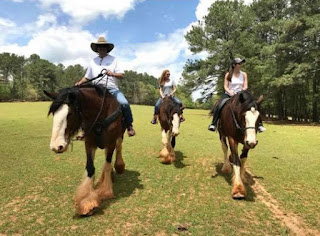 clydesdale, ride a clydesdale, trail ride, trail ride georgia, georgia travel, atlanta daytrip