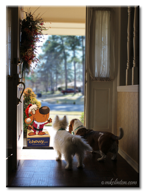Santa Chewy at the door for Westie and Basset Hound