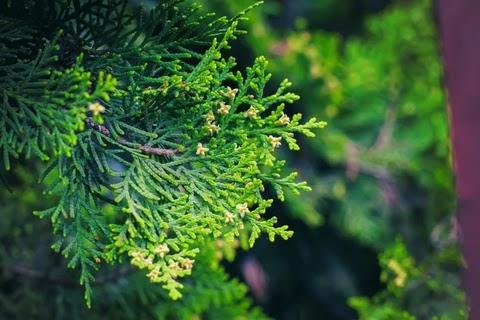 5 loài cây thiêng giúp làm sạch năng lượng của bạn