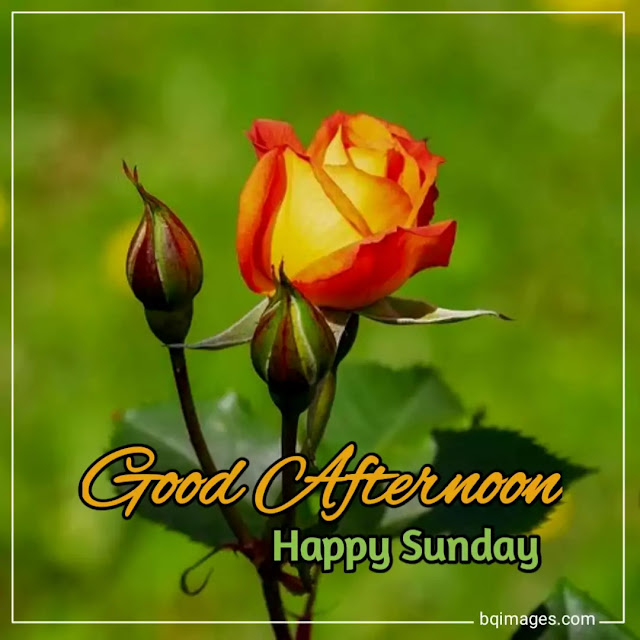 cute happy sunday images