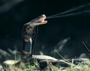 Daftar 15 Hewan Berbahaya Di Hutan Amazon