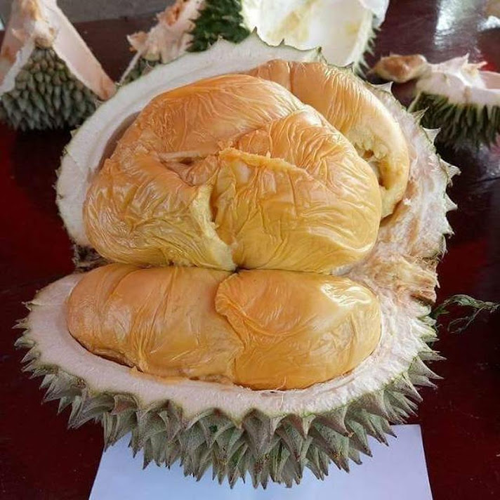 bibit durian musang king bibit durian bibit durian musangking Palopo