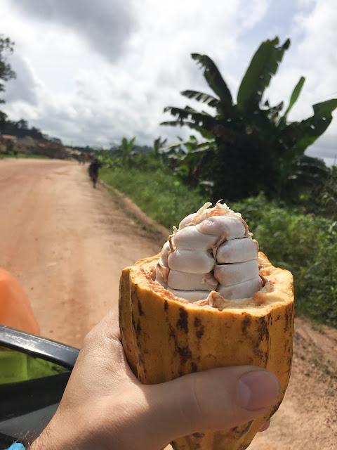 Cacao, just outside Kakum National Park, Ghana