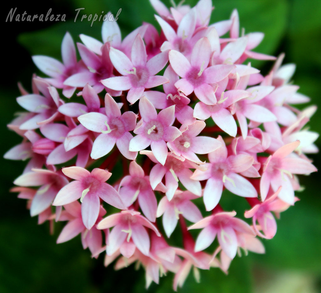 Naturaleza tropical 8 plantas que florecen todo el a o en - Plantas exteriores todo el ano ...