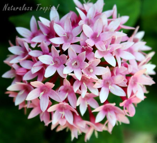 8 plantas que florecen todo el a o en macetas plantas - Plantas exteriores todo el ano ...