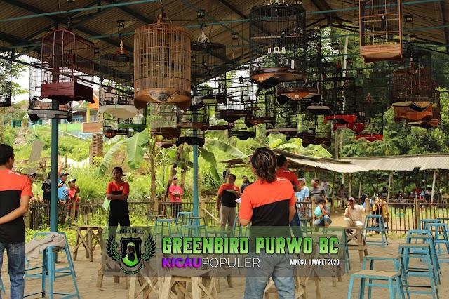 Latber Greenbird Purwo BC Wajak