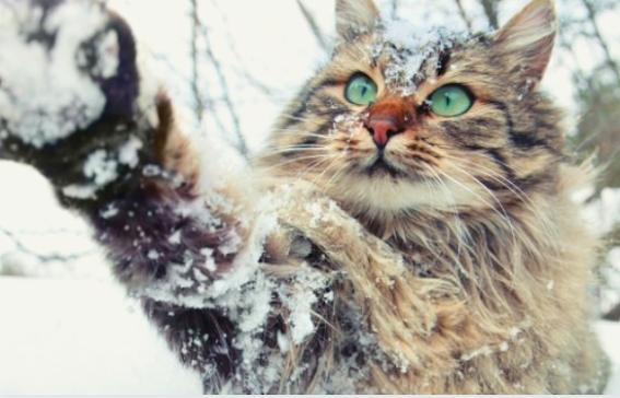 10 conseils pour prendre soin de votre chat par temps froid