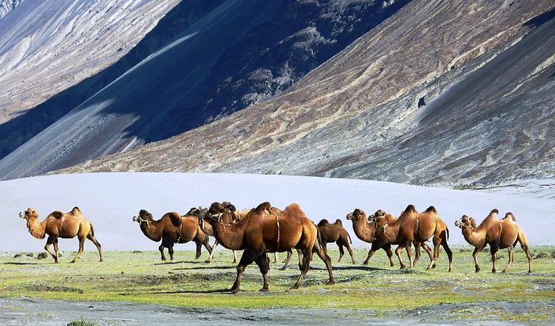 Amazing and Interesting Facts about Ladakh in Hindi, History of ladakh