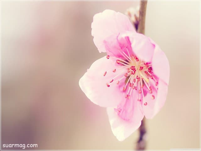 صور خلفيات - خلفيات ورد 6   Wallpapers - Flowers backgrounds 6