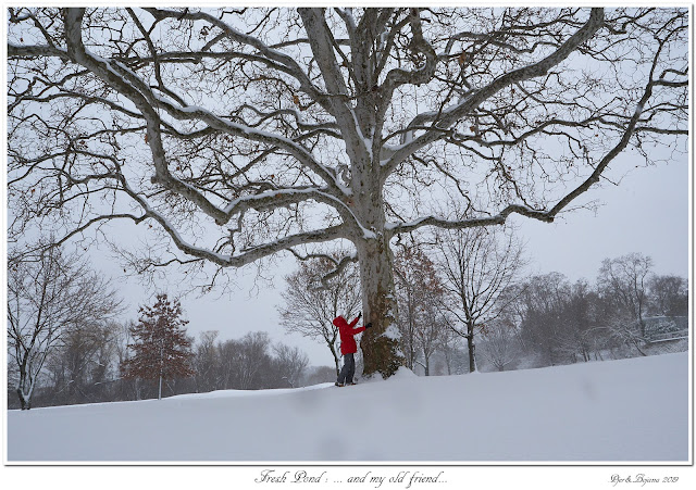 Fresh Pond: ... and my old friend...