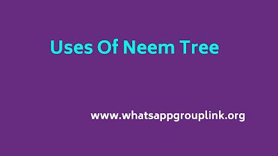 uses of neem tree