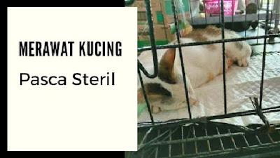 merawat kucing pasca steri