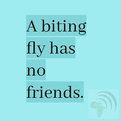 A biting fly has no friends. African Proverb