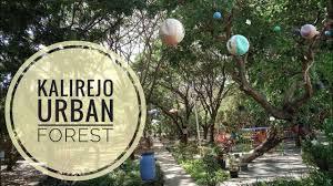 Bersantai dan Belajar di Kalirejo Urban Forest