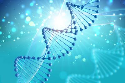 Hebras de ADN