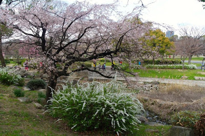 Osaka Castle Park Cherry Blossom Trees