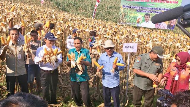 Mobile Corn Dryer, Solusi Pasca Panen Petani Jagung