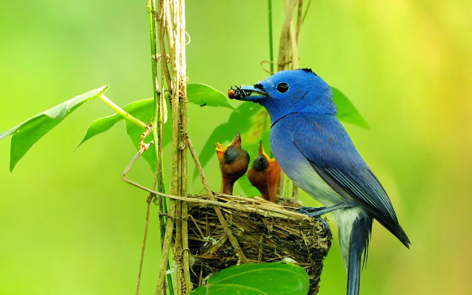 Cute Birds Hd Wallpaper Free Download: Pássaros: Passaros Coloridos (Colourful Birds