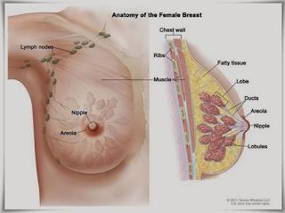 obat tradisional untuk kanker payudara stadium 3, pengobatan kanker payudara dr warsito, obat alami penyembuh kanker payudara, kanker payudara dapat menyebabkan kematian, obat kanker payudara mujarab, cara pengobatan kanker payudara stadium awal, kanker payudara tidak nyeri, tanda kanker payudara stadium 4, obat menyembuhkan kanker payudara, kanker payudara makalah, info pengobatan kanker payudara, obat buat kanker payudara, cara pengobatan kanker payudara dengan propolis, kanker payudara lengkap, tanaman herbal untuk obat kanker payudara, kanker payudara non invasive, harapan hidup kanker payudara stadium 2, ciri kanker payudara ganas, pengobatan alternatif untuk kanker payudara, solusi mengatasi kanker payudara, cara mengobati kanker payudara yang ampuh, pengobatan kanker payudara di china, obat tumor/kanker payudara, operasi kanker payudara stadium 1, kanker payudara berdasarkan stadium, obat herbal tumor dan kanker payudara, obat pencegah kanker payudara
