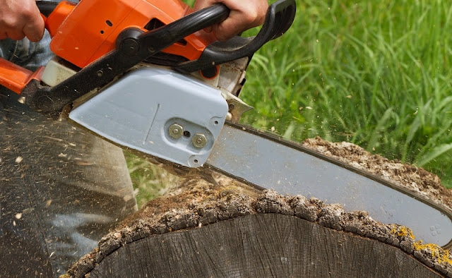 The Most Prominent Benefits Of Tree Removal Services