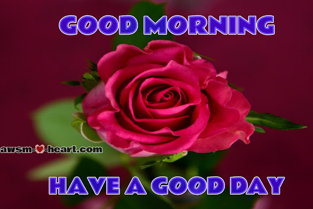 Good morning images with rose flowers download