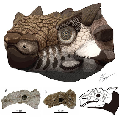 New Species 2020.Species New To Science Paleontology 2020 Additional