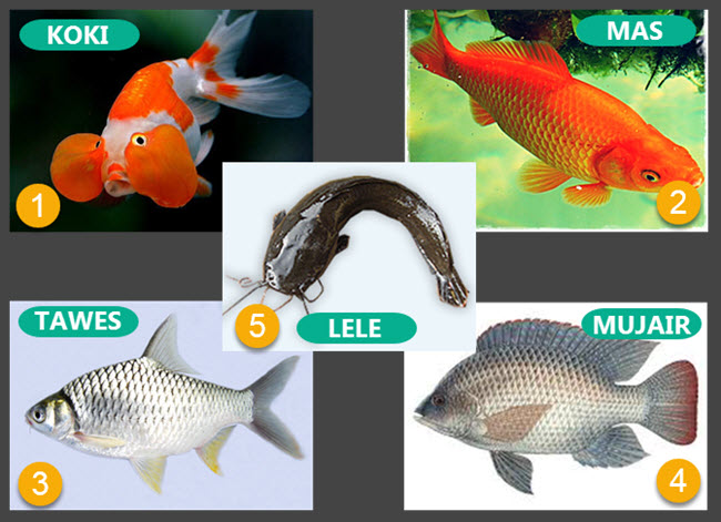 6100 Contoh Gambar Hewan Ikan Gratis Terbaik